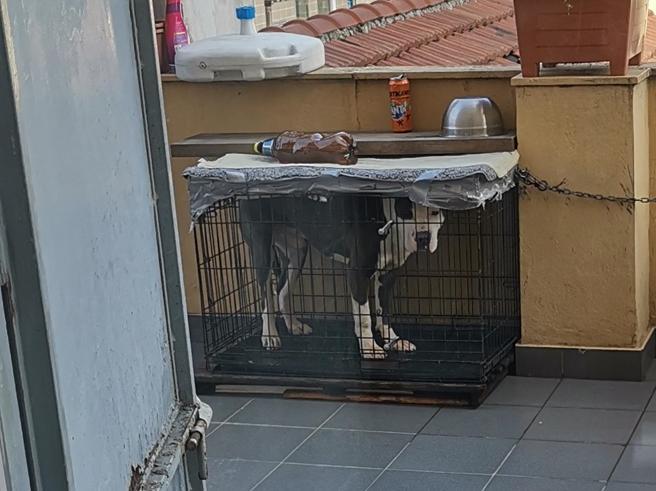Cane  in una gabbia di un metro quadro: proprietario denunciato