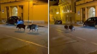 Cinghiali anche a Torino: passeggiano nei pressi della Gran Madre